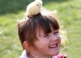 Chick - Longdown Activity Farm