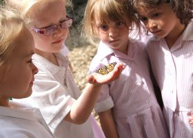 Portsmouth High Nursery children release butterflies
