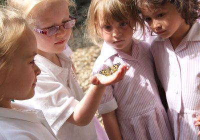 Caterpillars grow in the Nursery School