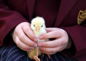 Pre-School farm animal visit