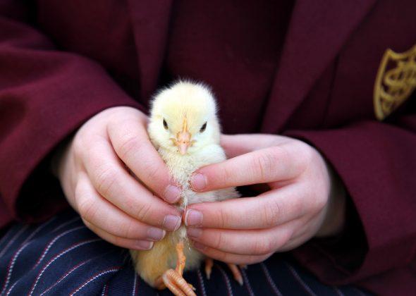 Pre-School farm animal visit