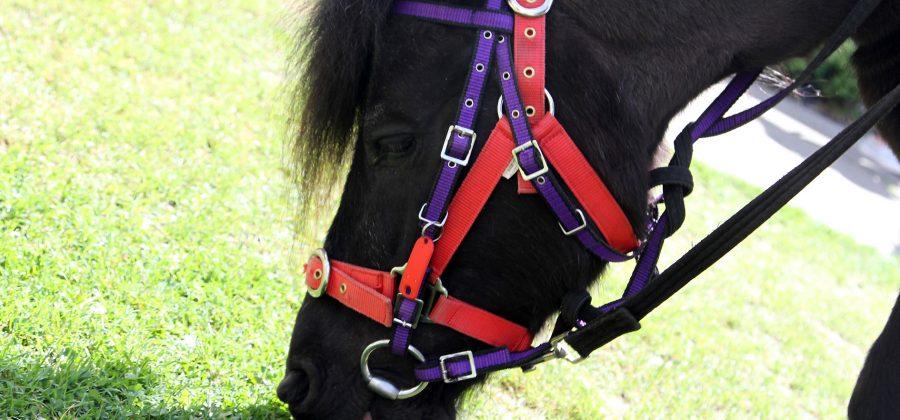 pony rides in Portsmouth