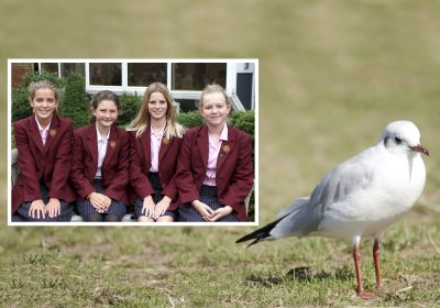Girls devise a seagull looting prevention