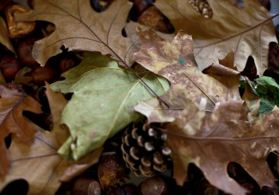 exploring autumn at Portsmouth High Pre-School