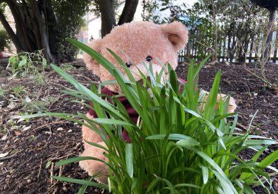 Buttercup Bear at Portsmouth High School Nursery